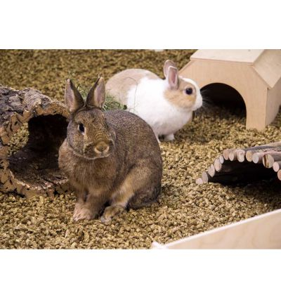 bunny bedding cosy | great deals at zooplus.ie!