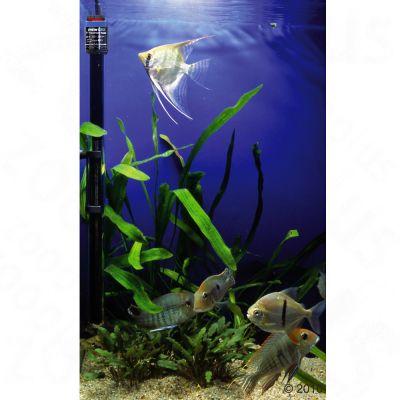 Chauffage de précision pour aquarium Jäger
