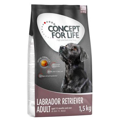 Concept for Life Labrador Retriever Adult