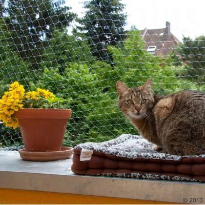 Filet de protection transparent pour chat