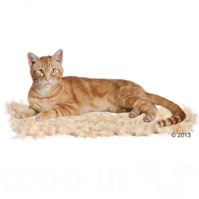 adventskalender katzen zooplus