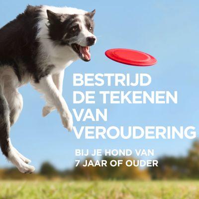 Hill's Canine 7+ Youthful Vitality Medium met Kip & Rijst Hondenvoer