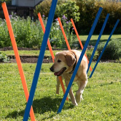 Kit complet Agility pour chien Fun & Sport