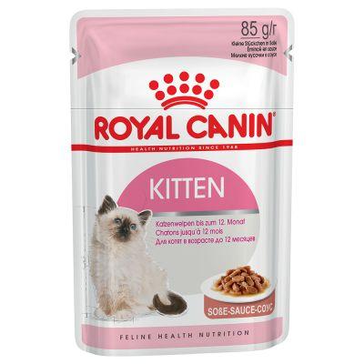 Kitten Breed: Persian Kitten Paket