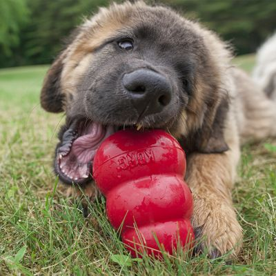 Orijen Dog Food Reviews >> KONG Original Red - Great deals on dog toys at zooplus