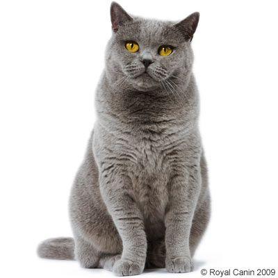 Yarrah Cat Food Review