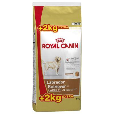 royal canin labrador retriever adult w sklepie zooplus. Black Bedroom Furniture Sets. Home Design Ideas