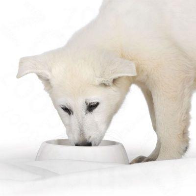 Royal Canin Starter Mousse Mother & Babydog Hondenvoer