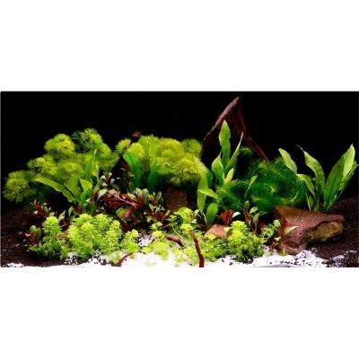 Set di piante per acquario  Zooplants